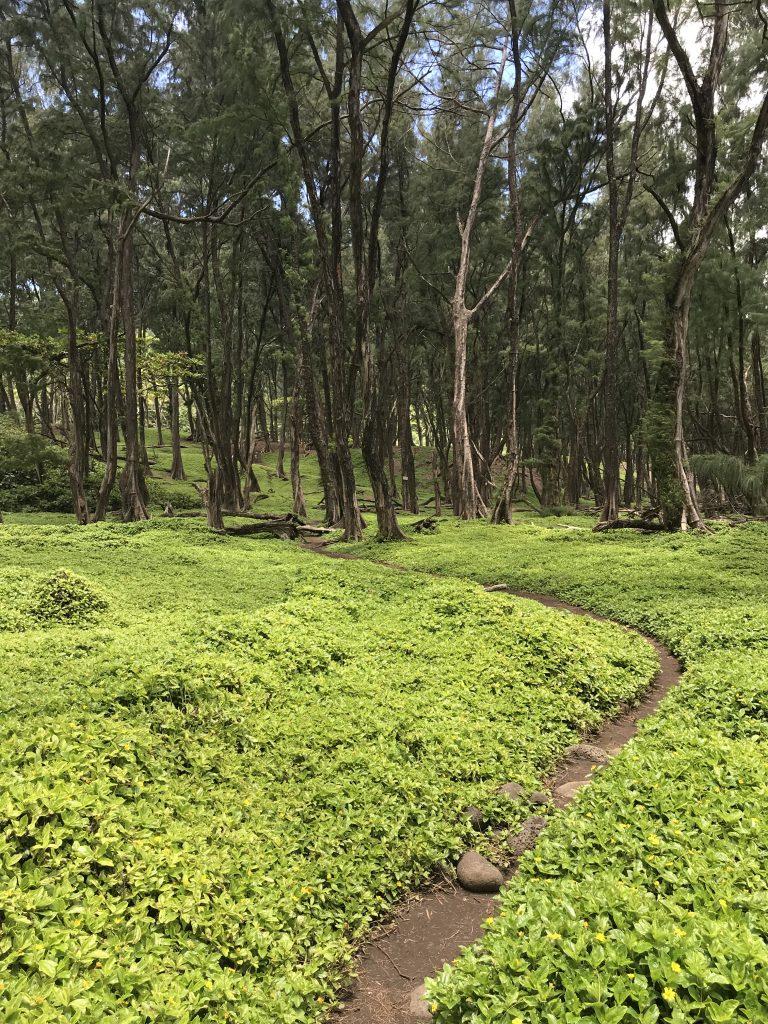 Trail running on the Big Island