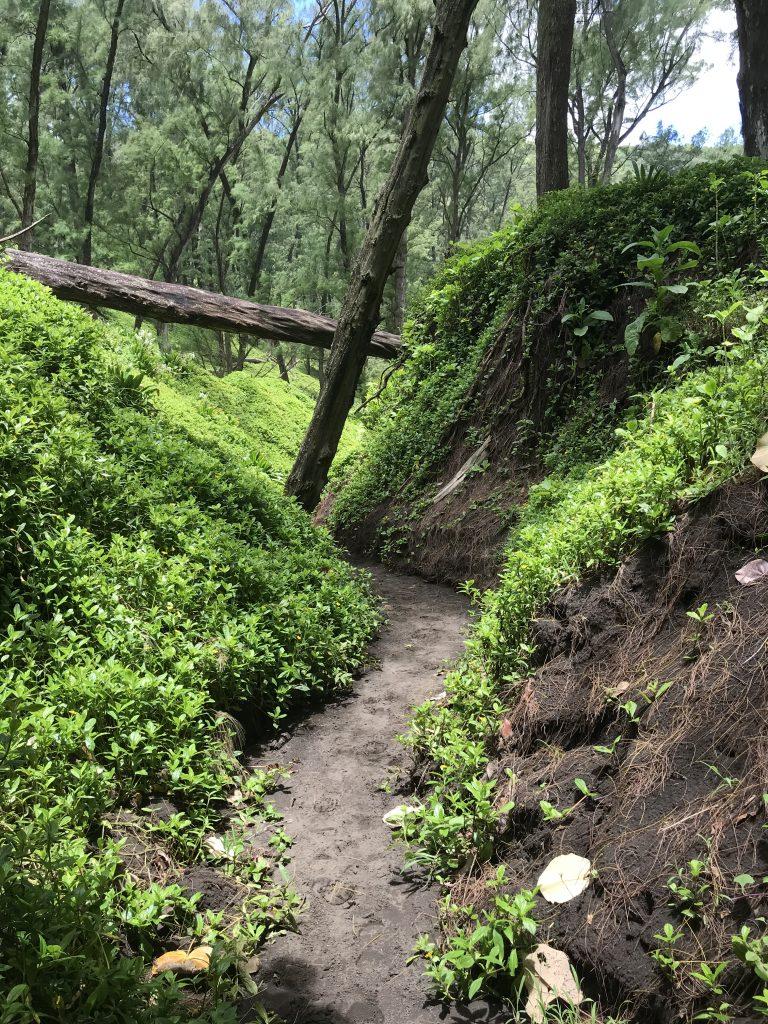 Hawaii Big Island trail running