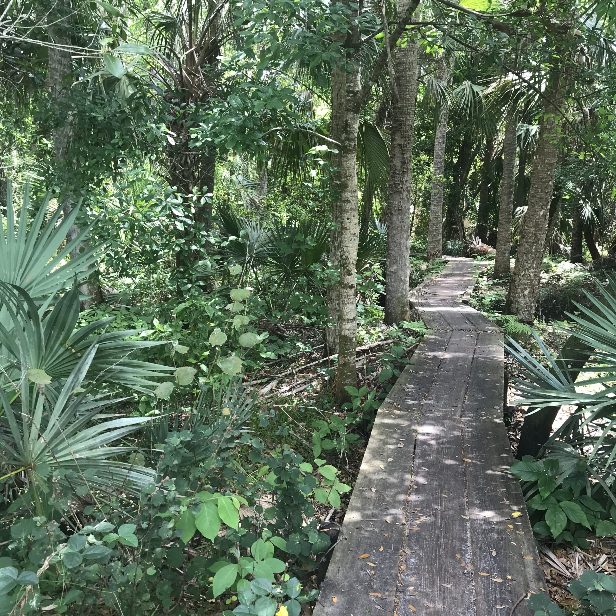 So much green to see when you run on all kinds of trails