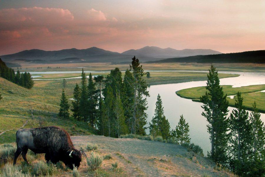 Vacation Races Yellowstone Half Marathon & 5K